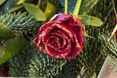 Red rose with moss and pine. A red rose with gold glitter and moss and pine Royalty Free Stock Photography