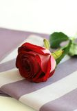 Red rose on napkin. Royalty Free Stock Image