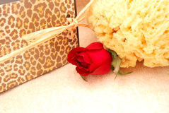 Red Rose and Natural Sponge Stock Photography