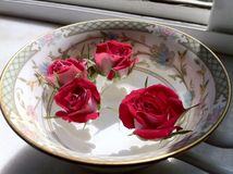 Red Rose in Noritake Tea Cup royalty free stock photo