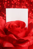 Red rose with note Stock Photography