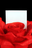Red rose with note Stock Photos