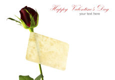 Red rose and old card isolated Royalty Free Stock Photos