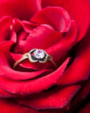Red rose with an old family ring stock images