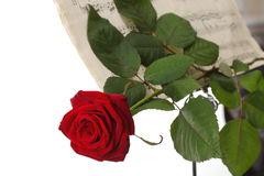 Red rose and old notes Sheet music Royalty Free Stock Images
