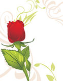 Red Rose On The Decorative Background Royalty Free Stock Images