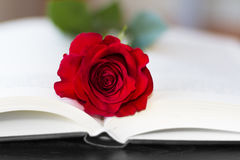 Red rose on the open book Royalty Free Stock Images