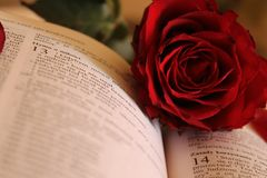 Red rose on open book Stock Photo