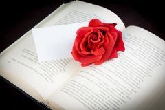 Red rose on the open book with blank gift card for text Royalty Free Stock Image
