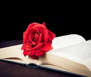 Red rose on the open book with space for text Stock Photo