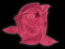 Precious Rose. This is a red rose, originally a drawing then highlighted in red royalty free stock image
