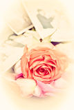 Red rose and old wedding photos Royalty Free Stock Photography