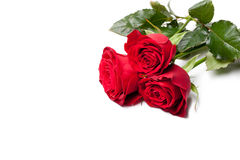 Red rose over white Stock Photos