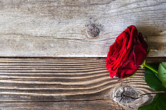 Red rose over wood Stock Image