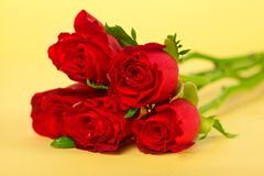 Red rose over yellow Royalty Free Stock Image