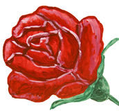 Red rose, painting Stock Image