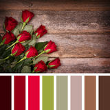 Red rose palette Royalty Free Stock Photo