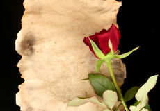Red rose on parchment Stock Photos