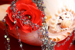 Red Rose Pearl Stock Photography