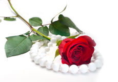 Red rose and pearl  beads on white Royalty Free Stock Photography