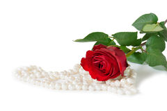 Red rose with pearl bijouterie necklace on white background. Stock Photography