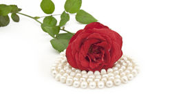 Red rose with a pearl necklace Stock Photos