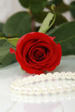 Red rose and pearl necklace Stock Photos