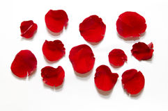 Red rose petal Stock Images