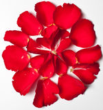 Red Rose Petal. Red Roses Petal Abstract with white background Royalty Free Stock Photography