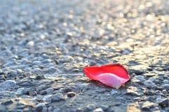 Red rose petal on asphalt Stock Images