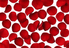 Red rose petal background. Close up Stock Photo