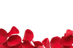 Red Rose Petal Border Stock Image