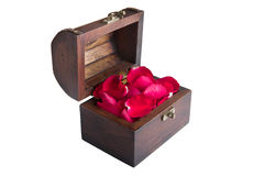 A red rose petal in chest Stock Image