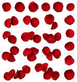Red rose petal collection isolated. On white stock photo