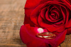 Red rose petal with gold rings Stock Photos