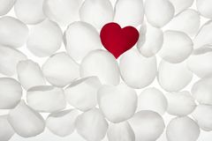 Red rose petal heart shape over white. Red little rose petal heart shape between white pattern wallpaper stock images