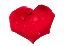 Red rose petal, heart shaped. Red rose petal isolated on white, macro shot with clipping path stock image