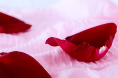 Red rose petal on pink fabric Royalty Free Stock Images