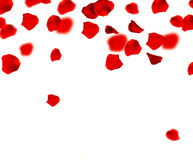 Red Rose Petals. Red Roses Petals Border.Selective focus stock images