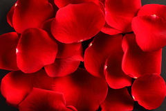 Red rose petals Royalty Free Stock Images