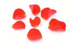 Free Red Rose Petals Stock Image - 1379581
