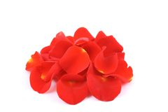 Red rose petals. Pile of red rose petals isolated on white stock images