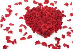 Red rose petals Royalty Free Stock Photos