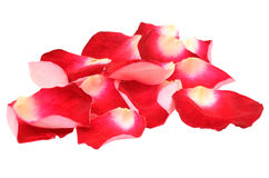 Red rose petals. Isolated on white background stock photos