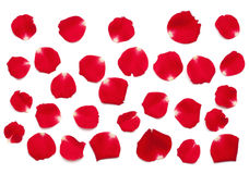 Red Rose Petals Stock Image