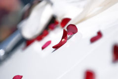 Red rose petals. A closeup of red rose petals, scattered across a table covered with white table cloth as decoration Royalty Free Stock Photography