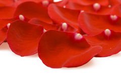 Red rose petals stock photos
