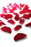 Red rose petals as the background Stock Images