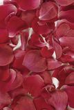 Red rose petals background Stock Photo