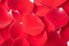 Red rose petals background Royalty Free Stock Photography